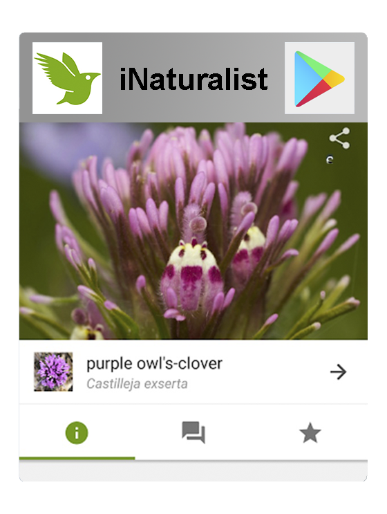 iNaturalist in Google Play