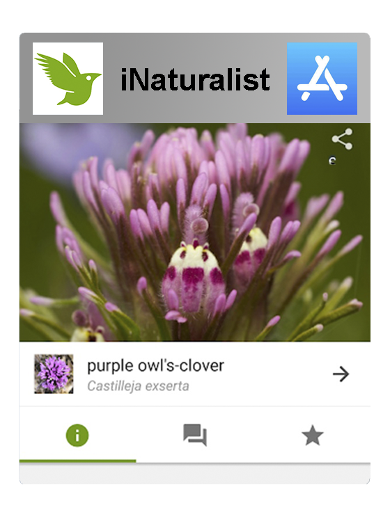iNaturalist in the Apple Store