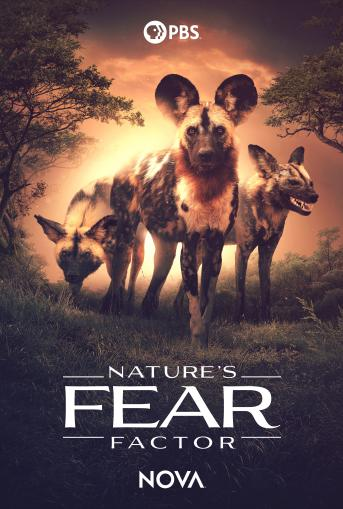 Movie Poster-Three wild dogs in nature